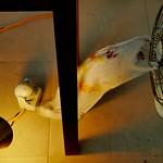Experimental_fan light_david white_