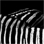 Zebra Abstraction_Kim McAVoy