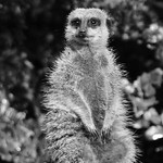 perth zoo_attention _john hunt