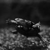 Underwater Ballet_Kim McAvoy