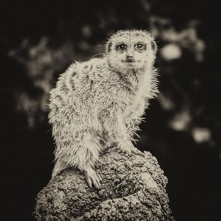 Perth Zoo 2015