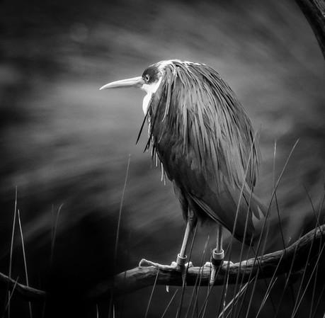 Bird_Paul McKeown