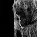 Pensive_Kim McAvoy