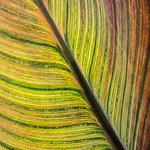 3_Sunlit Leaf_Ann Jones