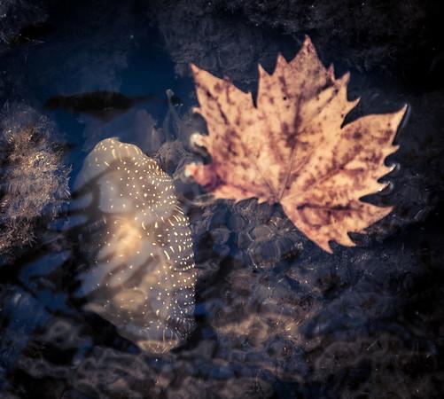 Number thirteen_Gelatinous Aquatic Life_Lee Bickford