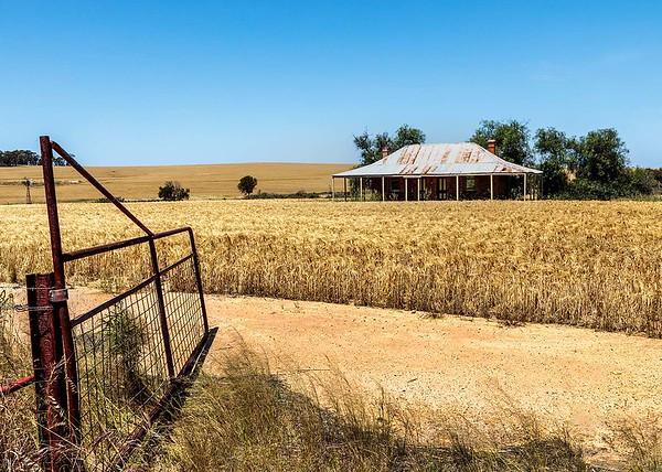 Home amongst the harvest Susan Moss