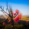 204 Hill bloom