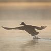Lake Herdsman WACC_ Robert Woodbury-0287