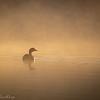Lake Herdsman WACC_ Robert Woodbury-0307