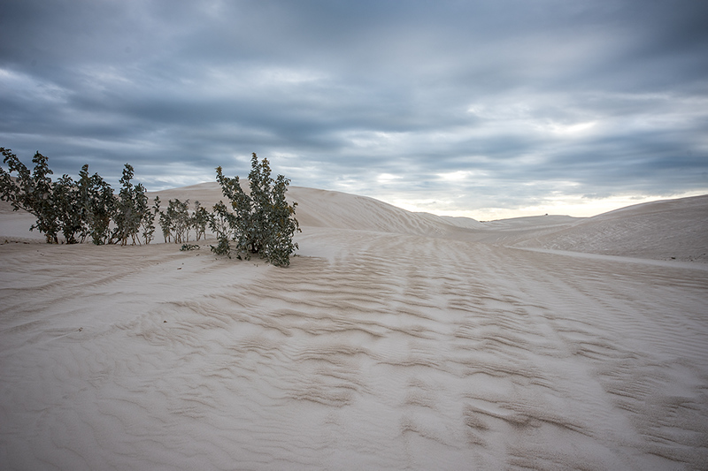 Theres life in these dunes