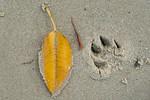 01_Leaf with paw print_Amanda Blanksby
