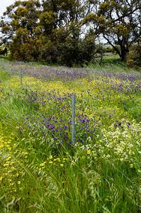 20130922 - Farm Flowers 016
