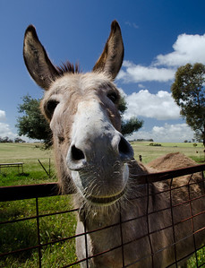 20130922 - Donkeys 014