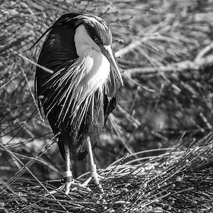 Bird In The Bush_ElaineReynolds