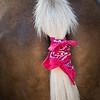 Pony Tail_Ann Jones