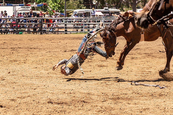 Boddington rodeo