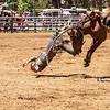 Boddington rodeo