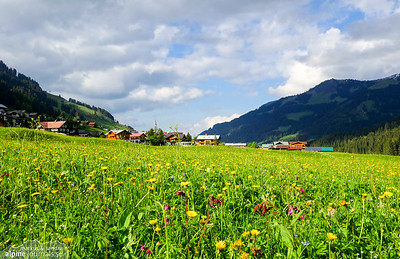Summer meadow in Mittelberg, Kleinwalsertal