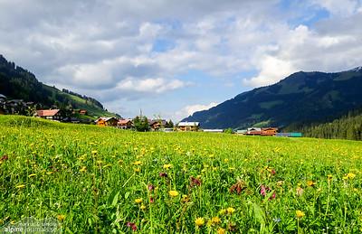 Summer meadow in Mittelberg, Kleinwalsertal