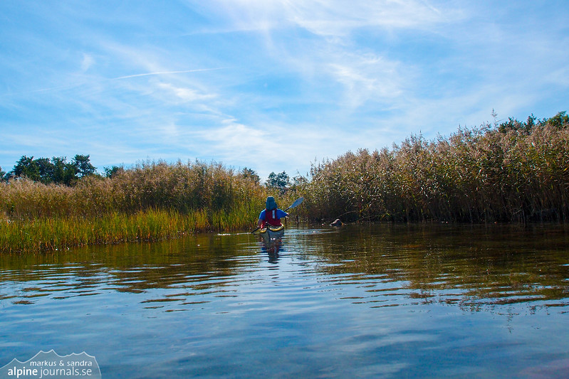 Through the reeds. It's nice being able to cross narrow channels where no boat can come. Near Österöran, Vidinge.