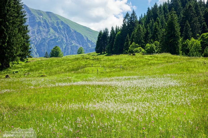 A summer meadow somewhere south of Sibratsgfäll.
