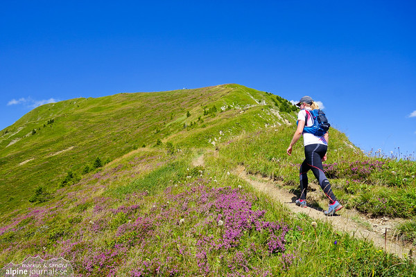 Heading up to Zafernhorn with whole mountain sides covered in heather.