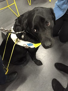 2016 Participation event for International Guide Dog Day. Pics by Helen Saxton