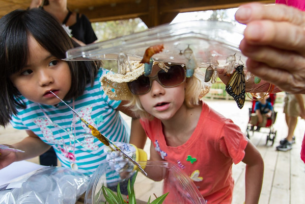 Storytelling and Nectar Parties