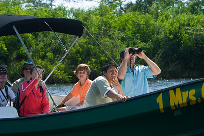 Bird watching on the New River while on the way to Lamanai Maya Site, Orange Walk, Belize.