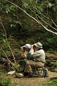 Birdwatching in the Gallon Jug area, Orange Walk, Belize.