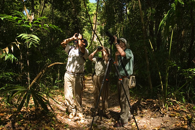 Birdwatching with local guide in the Gallon Jug area, Orange Walk, Belize.