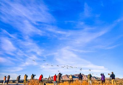 Photographers at Bosque del Apache Nat'l Wildlife Refuge, NM - 1 - 72 ppi