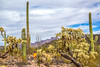 Organ Pipe National Monument in Arizona - C3-0074 - 72 ppi