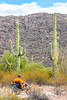 Organ Pipe National Monument in Arizona - C1-2 - 72 ppi