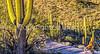 Saguaro National Park - C1-0062 - 72 ppi-2