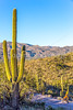 Saguaro National Park - C1-0062 - 72 ppi