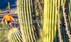 Saguaro National Park - C2-0020 - 72 ppi-4