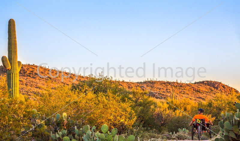 Saguaro National Park - C1-0293 - 72 ppi-2