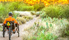 Saguaro National Park - C1-0404 - 72 ppi-2
