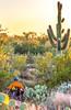 Saguaro National Park - C1-0347 - 72 ppi-5