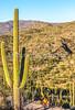 Saguaro National Park - C2-0077 - 72 ppi-2