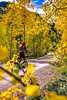 Mountain biker on Colorado's Alpine Loop - Lake City to Engineer Pass in San Juan Mts  - 1 - 72 ppi