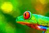 Frog-1---Costa-Rica---20_0193---72-dpi