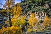 Mountain biker on Colorado's Alpine Loop - Lake City to Engineer Pass in San Juan Mts  - 24 - 72 ppi