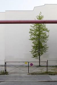 10 Baum vor Brandwand, Berlin, 2007 | Tree in front of fire wall, Berlin, 2007