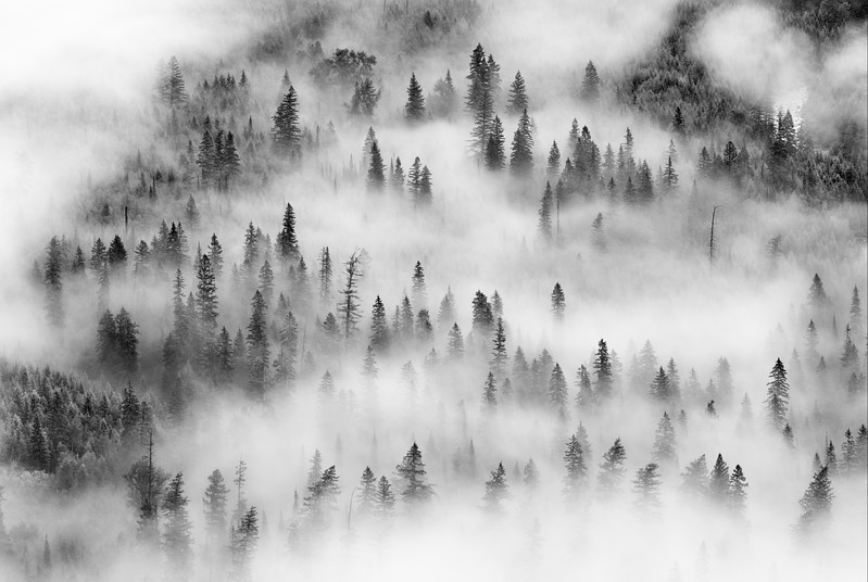 Glacier Forest in the Mist