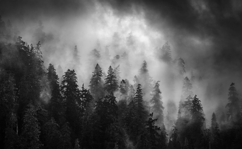 Ecola Fog
