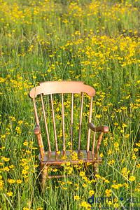 kadence-wild-flowers-1