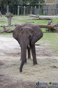 kadence-allyson-zoo-64