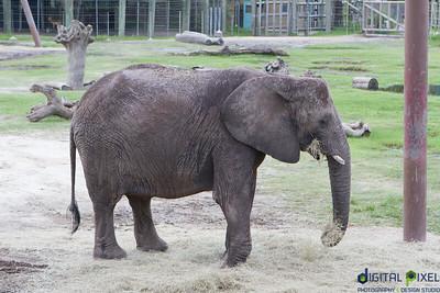 kadence-allyson-zoo-68